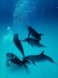 Spotted Dolphins, Bahamas  Nikon F4, 18mm, Aquatica by Andrew Dawson