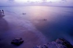 Swimmers in the bay off stonetown , Zanzibar. Dusk after ... by Andrew Woodburn
