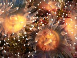 Golden Cup Corals/Nikon F4/105mmMacro/Velvia by Andrew Dawson