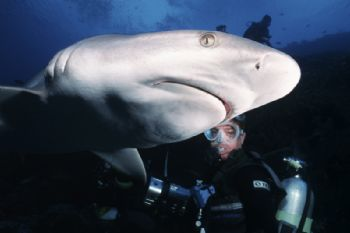 click to go to the contest