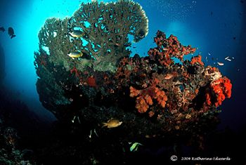 table coral and inhabitants taken with a 16mm fisheye len... by Katherine Edwards