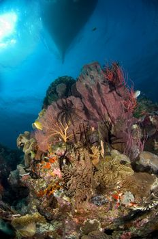 An enormous barrel sponge is the jewel in the crown on th... by Erin Quigley