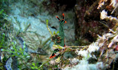 Nudibranch Canaon S70 No Strobe Macro Modus by Beate Krebs
