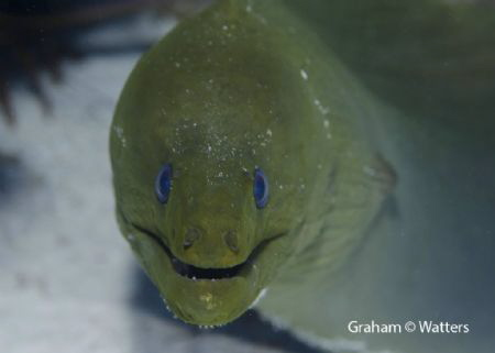 A moray eel I saw in Cozumel Mexico by Graham Watters