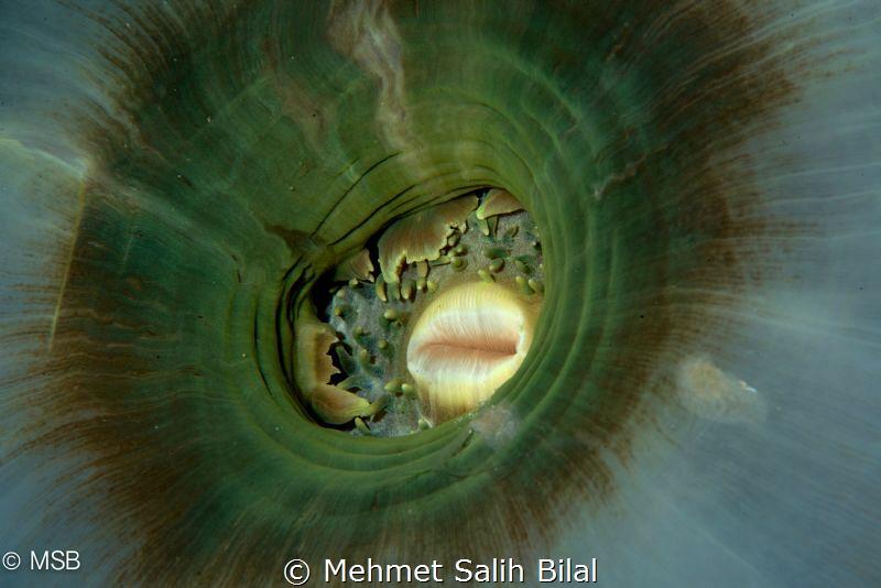 Reverse side. by Mehmet Salih Bilal