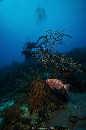 Diving in Raja Ampat, Canon EOSDiii, EF 17-40/4L,1/80 at ... by Ivan Vychodil