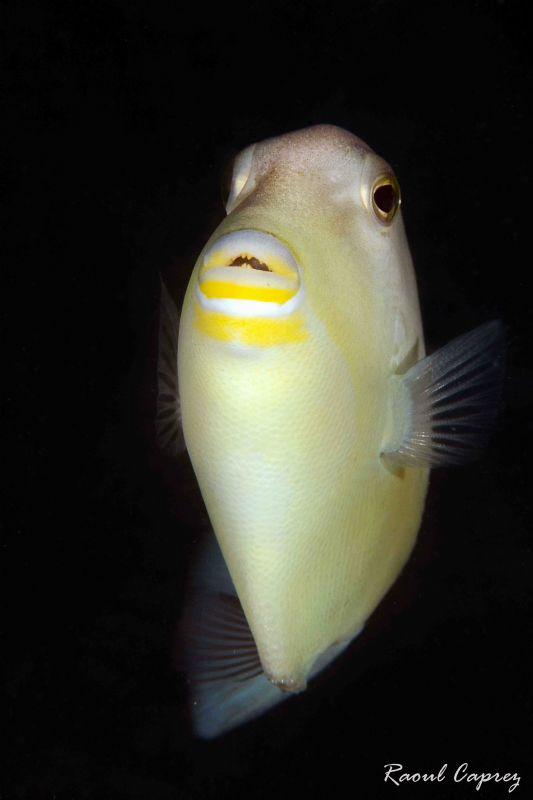 Yellow kiss by Raoul Caprez