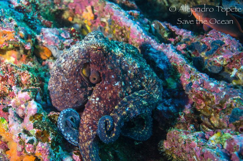 Octopus  movements by Alejandro Topete