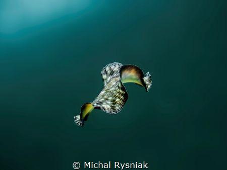 Flying carpet by Michal Rysniak