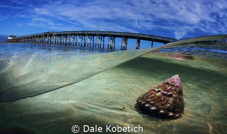 turban snail newport morning by Dale Kobetich