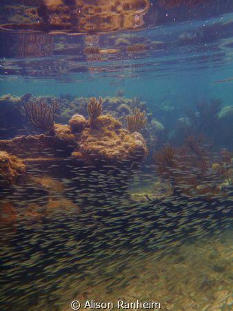 Near a wreck, Bay Islands. by Alison Ranheim