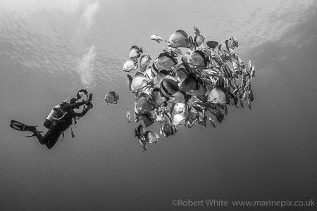 Taken at Shark Reef, Ras Mohammed, Egypt in June this yea... by Rob White