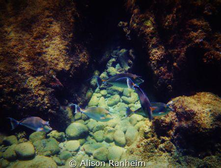 More Unicorns, Maui! by Alison Ranheim