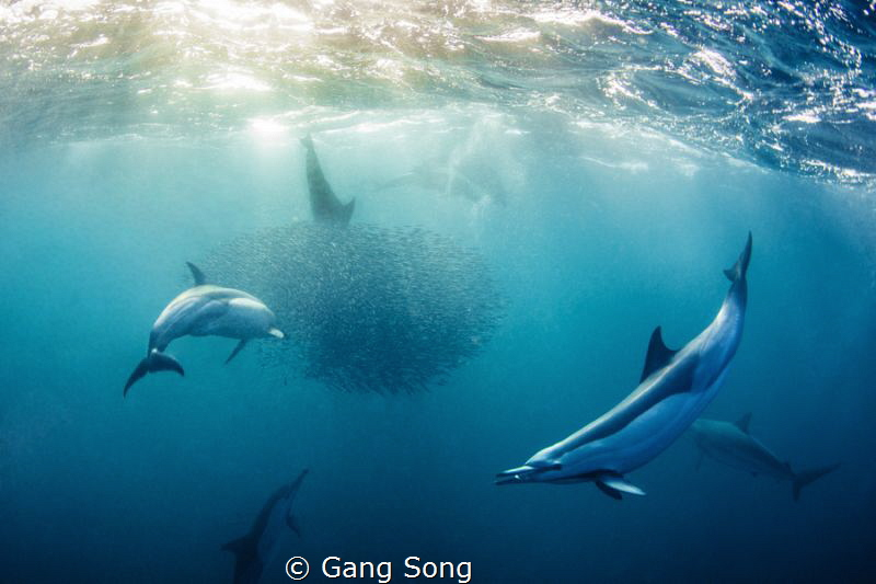 Sardine in the mouth by Gang Song