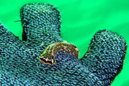 Nudibranch - friendly little guy... Taken in La Jolla, CA... by Dallas Poore