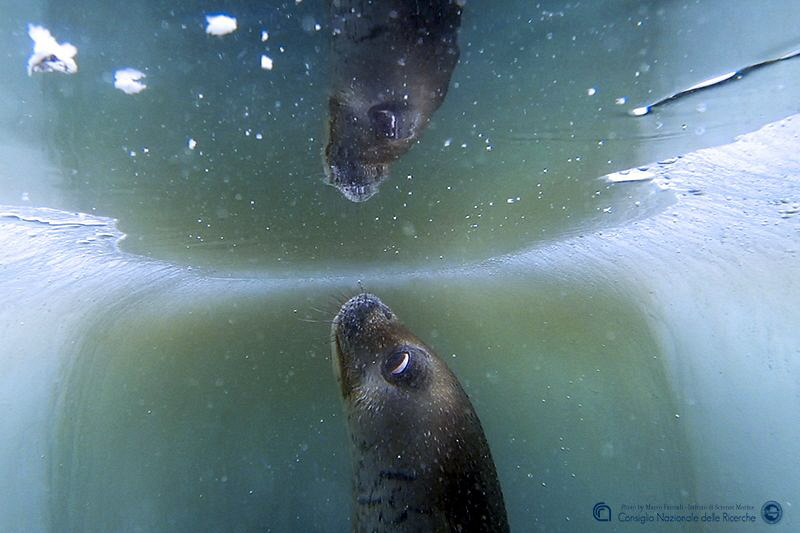 Reflections in the sea-ice hole (Antarctica) by Marco Faimali (ismar-Cnr)
