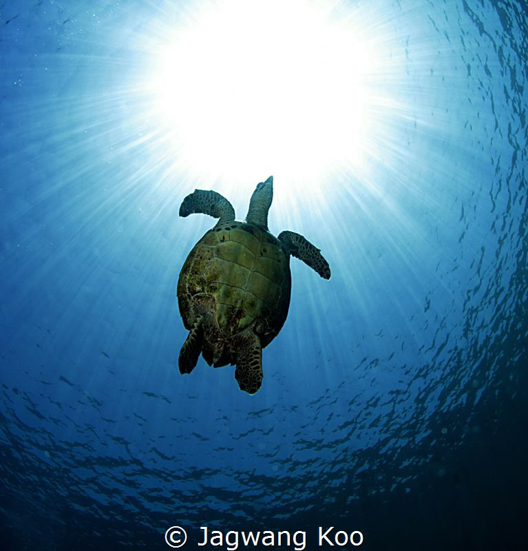 turtle by Jagwang Koo