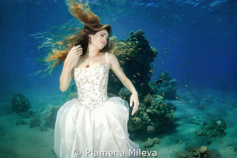 D&A Queen by Plamena Mileva