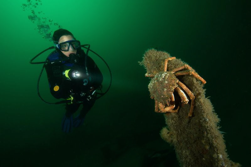 Spider crab & diver by Paul Colley