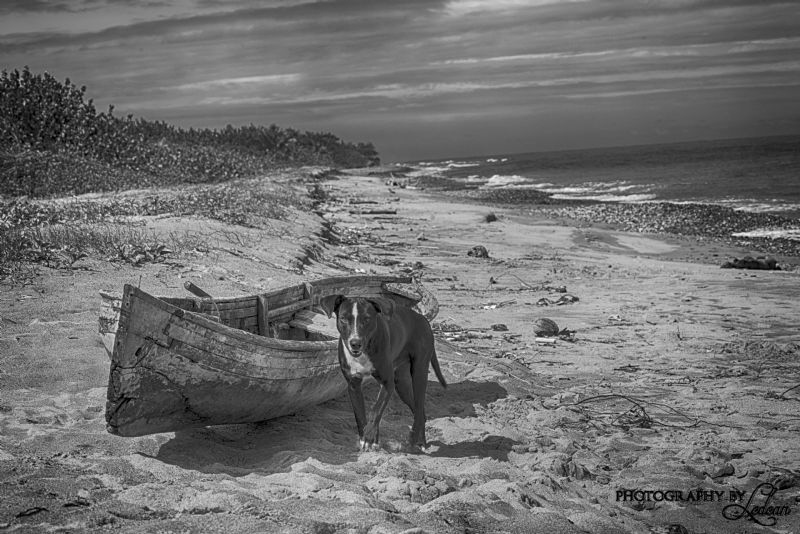 Walking along a lonely stretch of beach, a boat and a dog... by Ledean Paden
