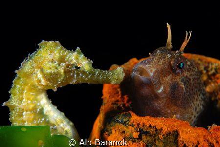 Face to face by Alp Baranok