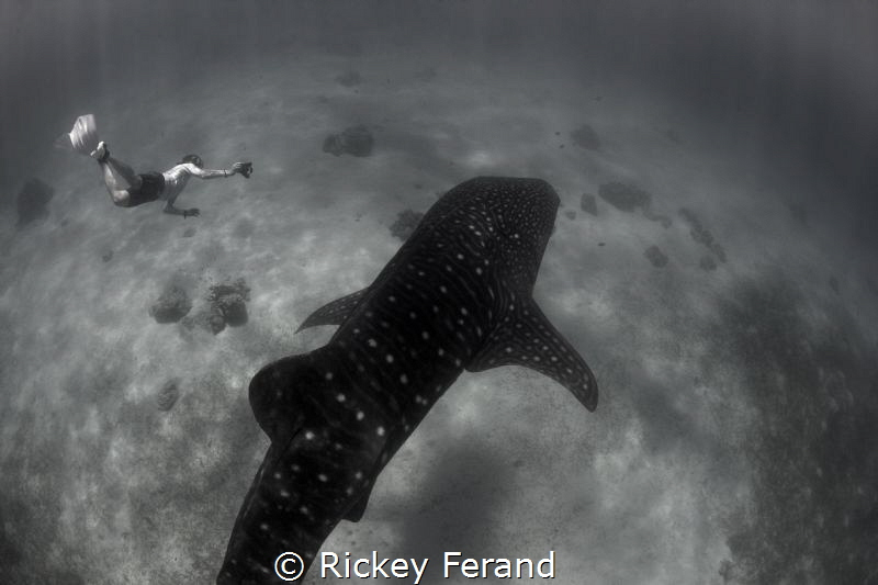 Snorkeling with Whale Sharks in Oslob, Philippines by Rickey Ferand