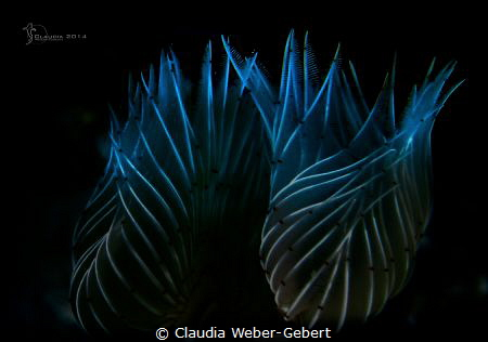 tranquillity...