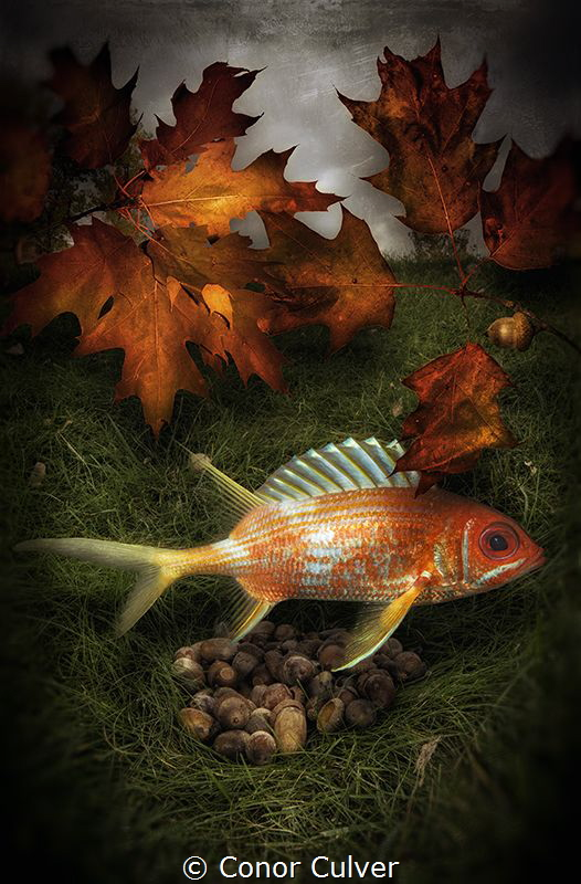 """Squirrel Preparing For Winter"" part of my Underwater Sur... by Conor Culver"