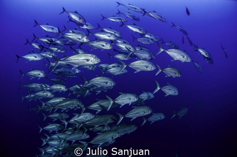 Jacks in Blue by Julio Sanjuan