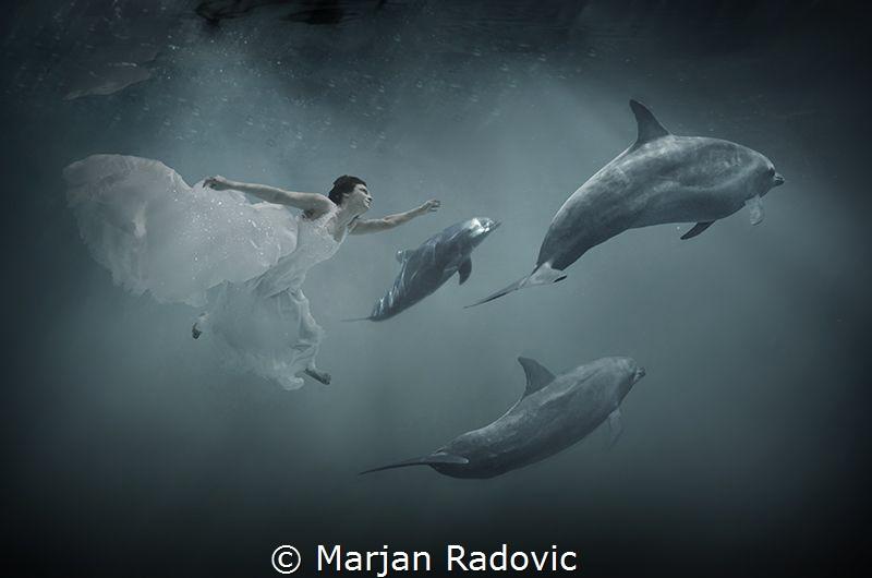 Dolphins weeding by Marjan Radovic