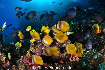 taken in Alor Archipelago Indonesia. by Gilles Brignardello