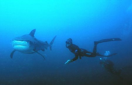 free diver and cameraman at about 15 m's with a beauty of... by Fiona Ayerst