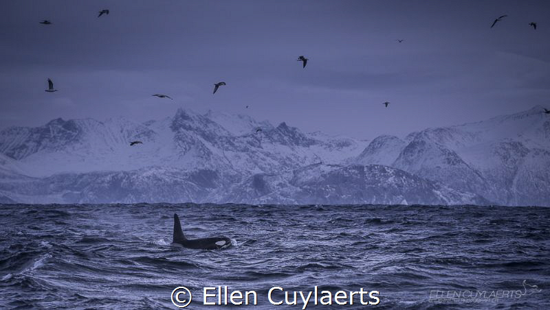 Looking for orcas on icy Norwegian days between the fjords. by Ellen Cuylaerts