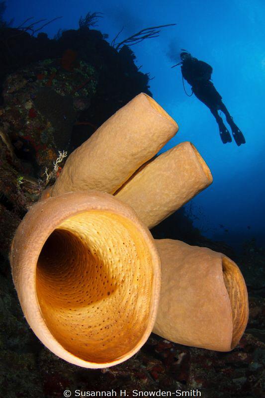 Diver & Sponge by Susannah H. Snowden-Smith
