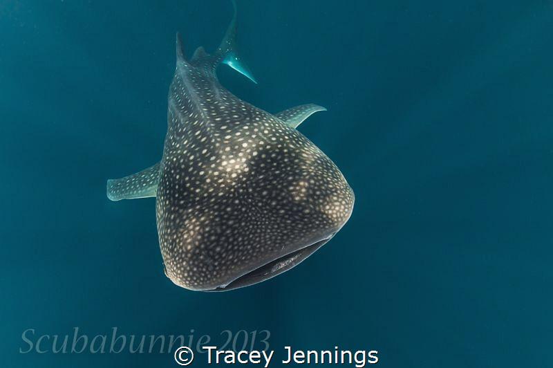 Heading towards .. by Tracey Jennings