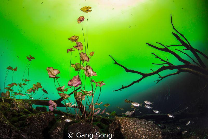 Natural Bonsai by Gang Song