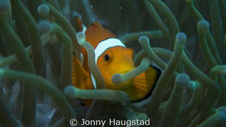 Nemo! by Jonny Haugstad