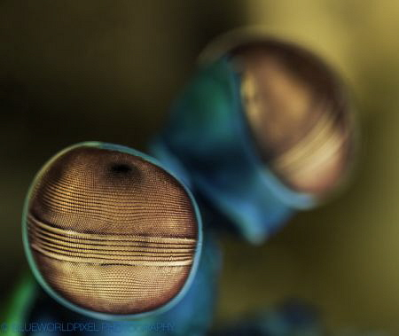 eye of a mantis shrimp, Bali 2014, Sony A7r 28-70mm+ smc,... by Elmar Laubender