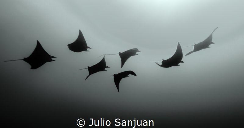 Manta's Melody by Julio Sanjuan