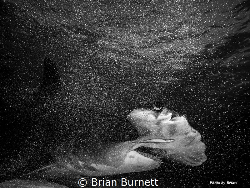 Shot with OMD-1 7-14 Zuiko wide angle, Nauticam housing, ... by Brian Burnett