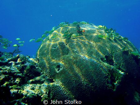 Captured pic while diving in Key Largo, Fl.  Using my Oly... by John Stofko