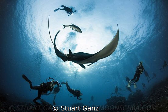 Manta Madness by Stuart Ganz