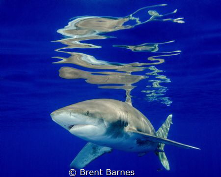 Surface reflections from an oceanic white tip in Cat Island by Brent Barnes