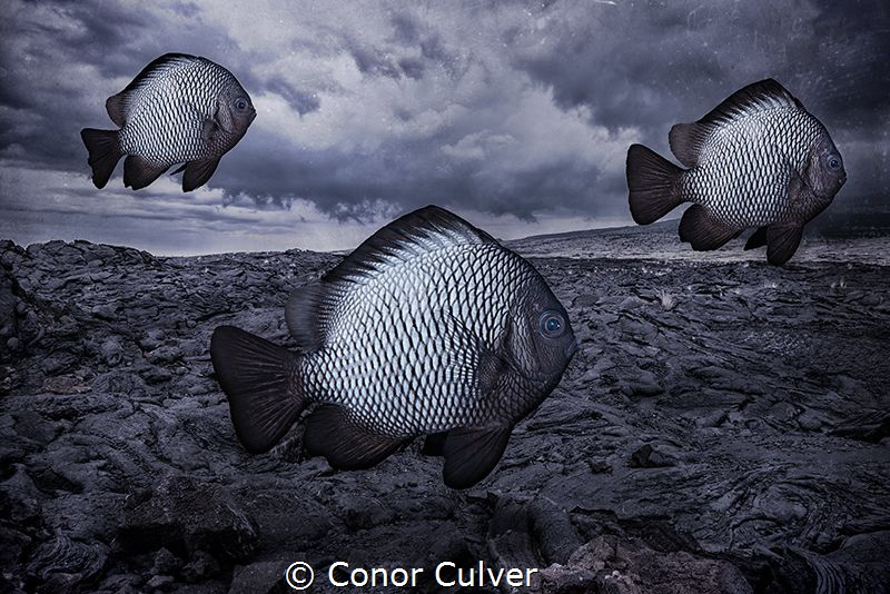"""""""Monochromatic School"""" part of my Underwater Surrealism s... by Conor Culver"""