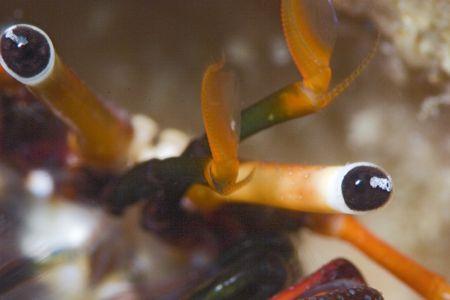 Full close of another ermith crab. Macro 100+ TC2x e no c... by Francisco Nakahara