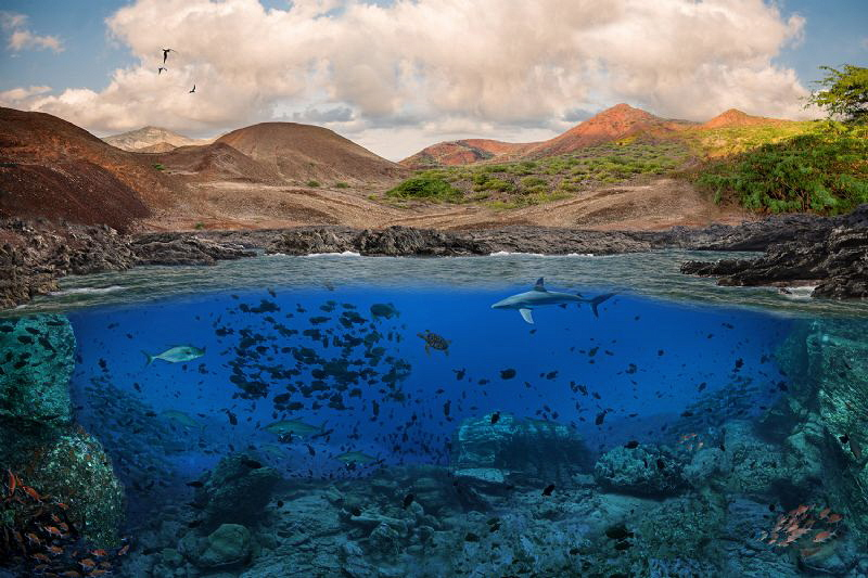 as the oceans should be: Ascension Island by Paul Colley