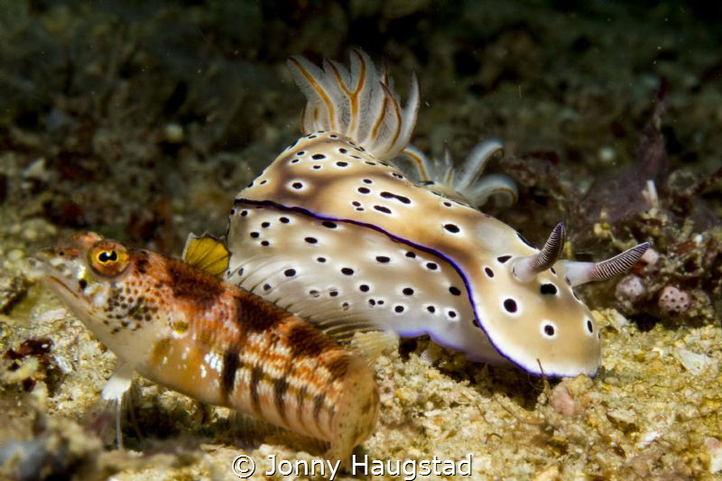 Nudi and a Goby by Jonny Haugstad