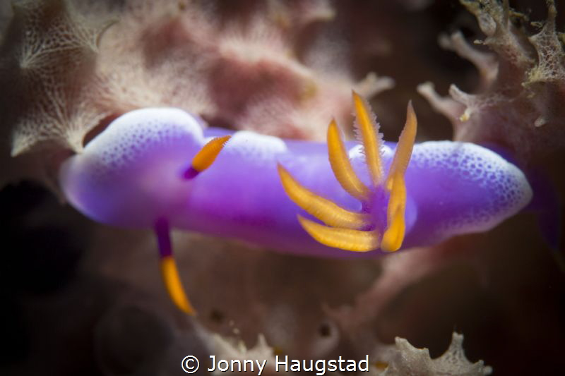 Nudimania! by Jonny Haugstad
