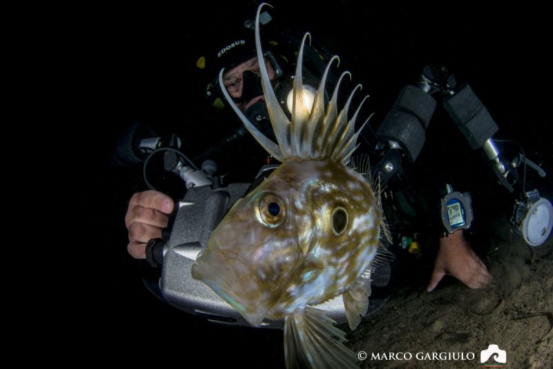 My friend Mimmo with a John Dory, night dive by Marco Gargiulo