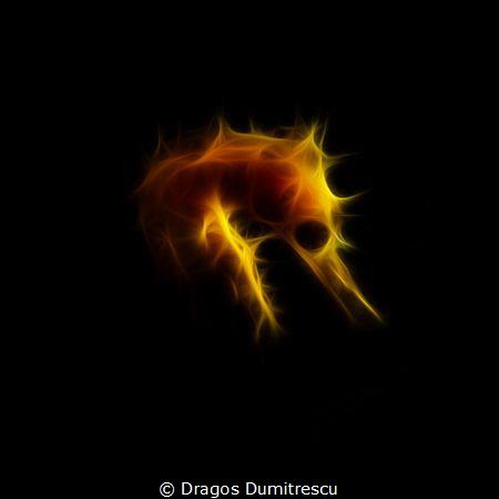 Shy Shape of the Sea(horse). Canon G12, InonS2000 strobe. by Dragos Dumitrescu